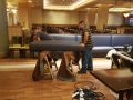 Custom-Commercial-Furniture-for-Restaurants-and-Hotels-by-GN-Upholstery-Los-Angeles-062